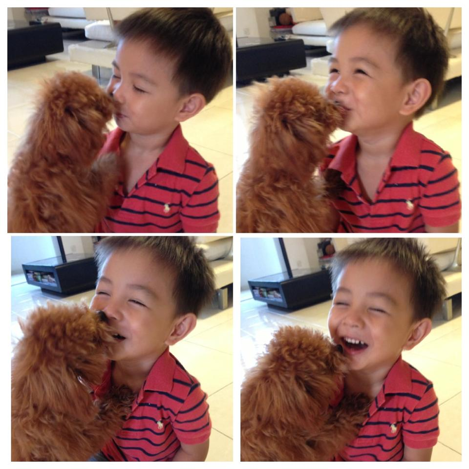 baby poodle with my boy