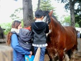 和风度翩翩的马交流感情
