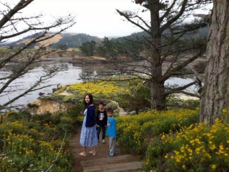 Point Lobos森林公园