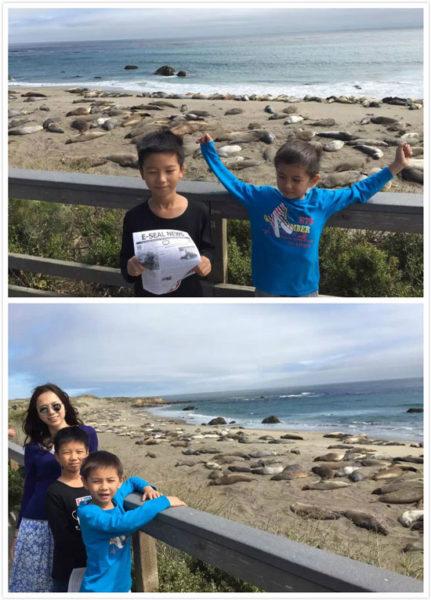 sealbeach海象滩