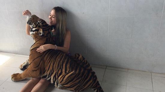在泰国喂老虎