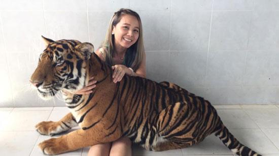 丹能莎朵老虎园抱老虎