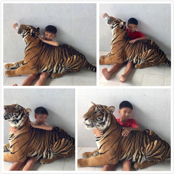 小孩子在丹能莎朵老虎园喂老虎
